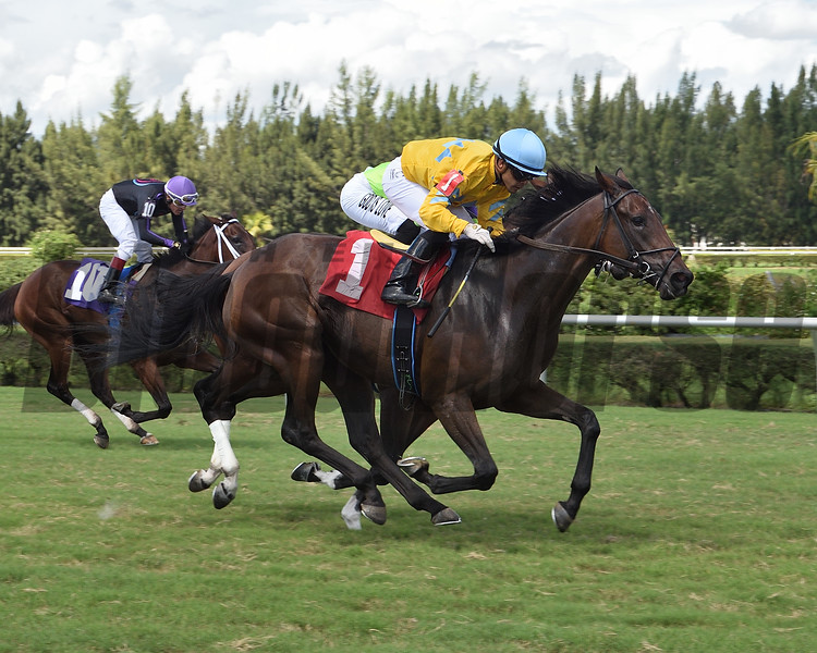 Spin Your Partner - Maiden Win, Gulfstream Park West, October 12,  2020<br /> Coglianese Photos/Lauren King