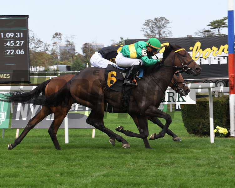 High Opinion wins a maiden special weight Saturday, October 10, 2020 at Belmont Park. Photo: Coglianese Photos