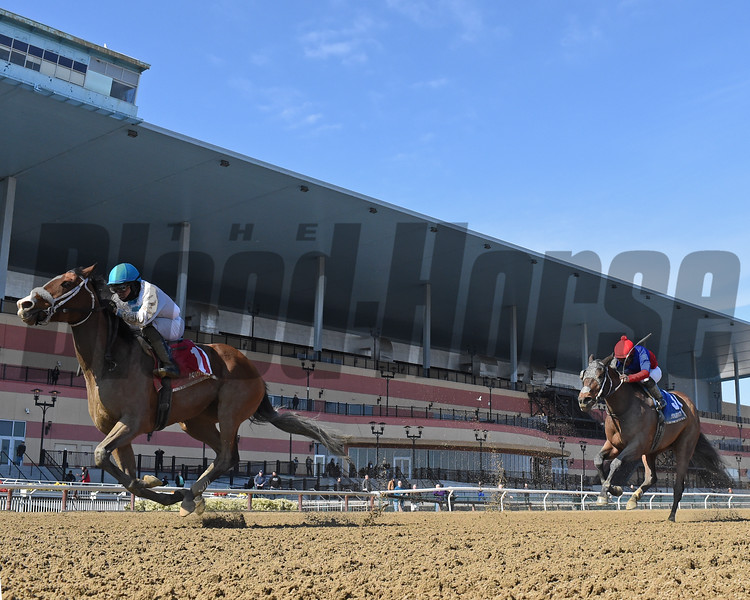 Crimson Frost and jockey Manuel Franco win the Heavenly Prize Invitational Stakes March, 8, 2020 at Aqueduct Racetrack. Photo: Coglianese Photos