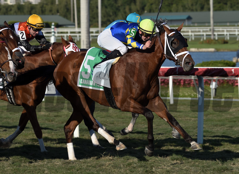 Sombeyay wins the 2020 Canadian Turf at Gulfstream Park<br /> Coglianese Photos/Lauren King