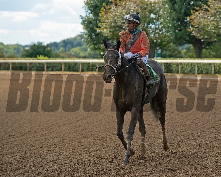 scene with Dash to the Top after the sixth race<br /> Opening day of the Keeneland fall meeting on October 2, 2020.