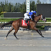 Legal Deal wins the 2020 Millions Sprint Preview Stakes at Gulfstream Park West<br /> Coglianese Photos/Lauren King