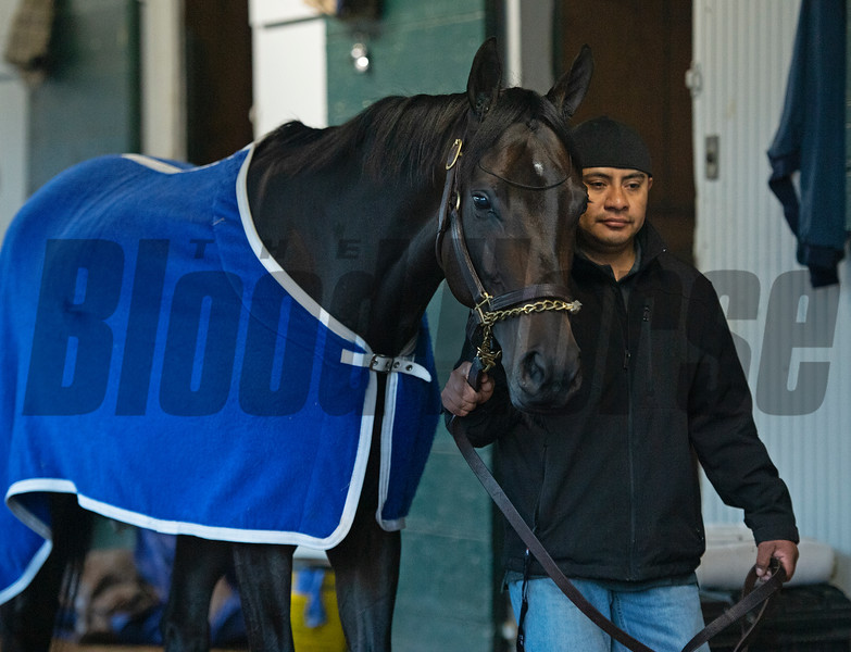 Caption: walking the shedrow<br /> Midnight Bisou at Keeneland on May 2, 2020 Keeneland in Lexington, KY.