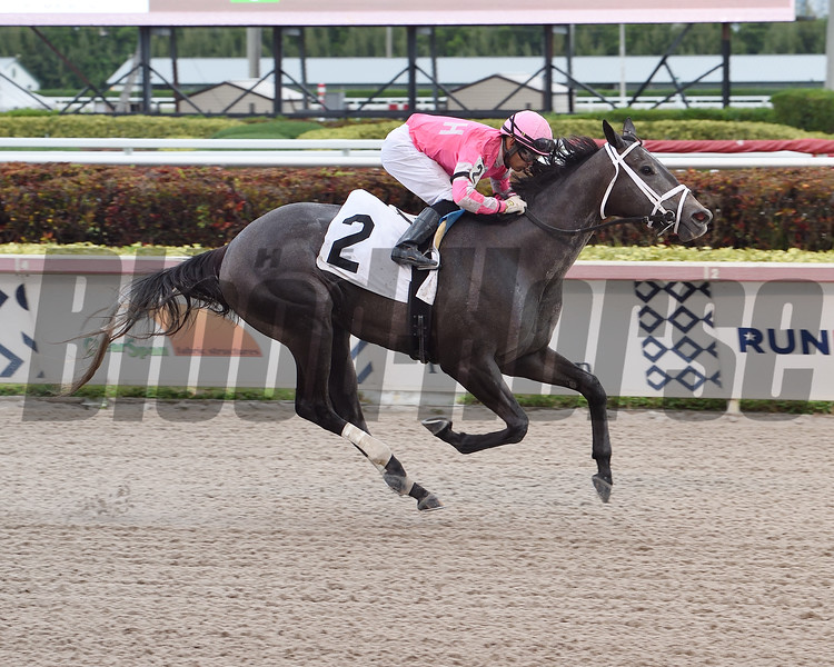 Up in Smoke wins an allowance optional claiming race Sunday, April 5, 2020 at Gulfstream Park. Photo: Coglianese Photos/Lauren King