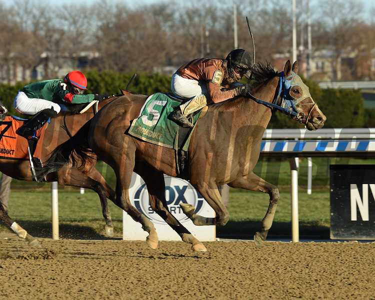 Honor Way wins the Garland of Roses Stakes Sunday, December 6, 2020 at Aqueduct. Photo: Coglianese Photos