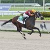 Noble Drama wins the 2020 FTBOA Florida Sire Wildcat Heir Stakes<br /> Coglianese Photos/Lauren King