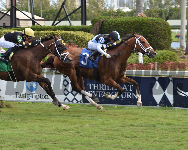 Largent wins an allowance optional claiming race Saturday, March 28, 2020 at Gulfstream Park. Photo: Coglianese Photos/Lauren King