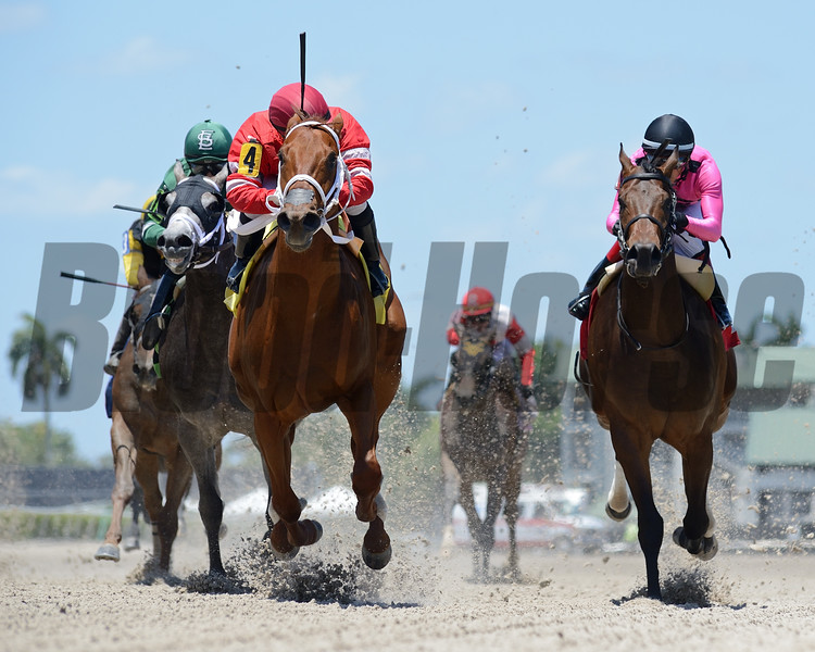 Just Right Mike - Maiden win, Gulfstream Park, May 8, 2020<br /> Coglianese Photos/Ryan Thompson