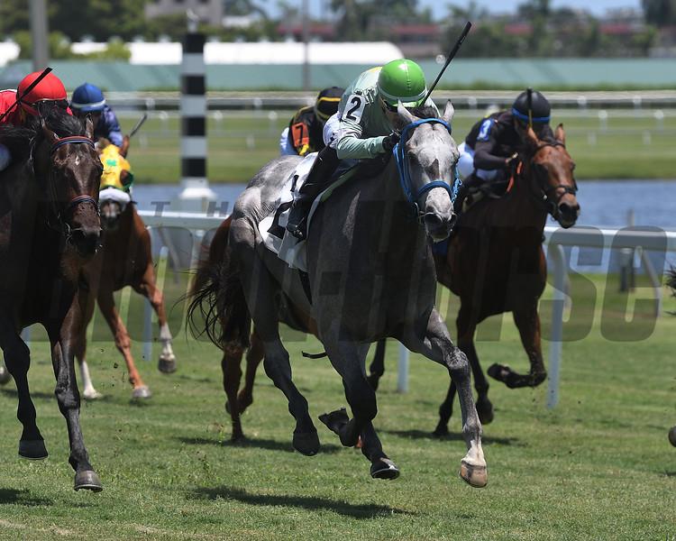 Espia - Maiden Win, Gulfstream Park, June 12, 2020<br /> Coglianese Photos/Ryan Thompson