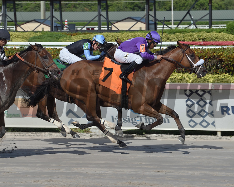 Squeezadios wins an allowance optional claiming race Saturday, August 15, 2020 at Gulfstream Park. Photo: Coglianese Photos/Lauren King