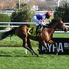 Original - Maiden Win, Aqueduct, November 14, 2020<br /> Coglianese Photos/Chelsea Durand