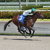 Hercules wins maiden special weight Saturday, August 29, 2020 at Gulfstream Park. Photo: Coglianese Photos/Lauren King
