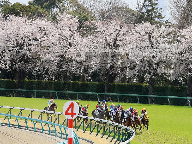 Racing Scene at Nakayama Racecourse March 22, 2020. Photo: Naoji Inada