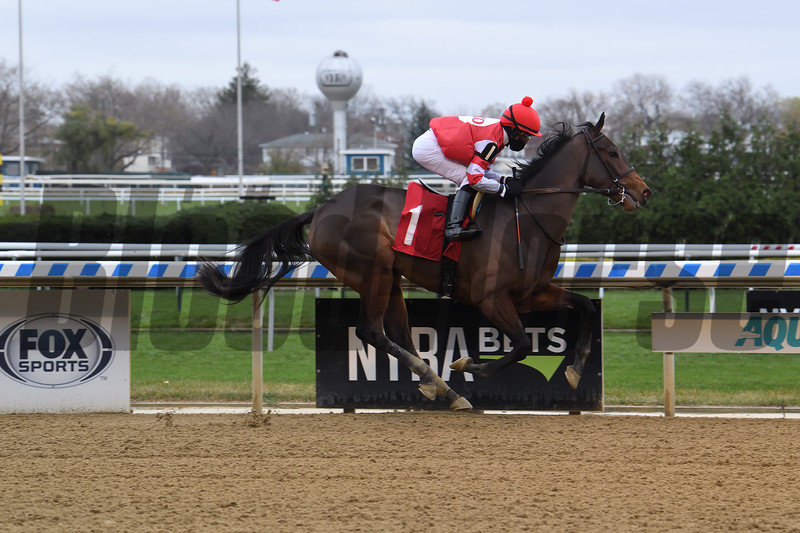 Brattle House wins maiden special weight Sunday, November 22, 2020 at Aqueduct. Photo: Coglianese Photos