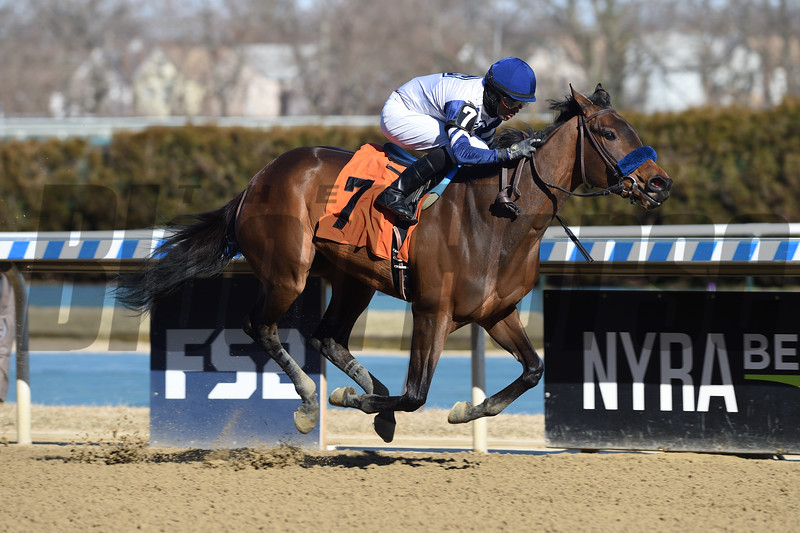 Pure Wow wins maiden special weight Saturday, March 7, 2020 at Aqueduct. Photo: Coglianese Photos