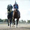 Sagamore Mischief - Maiden Win, Gulfstream Park West, November 15, 2020<br /> Coglianese Photos/Ryan Thompson