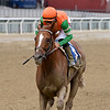 Forza Di Oro wins the Discovery Stakes at Aqueduct<br /> Coglianese Photos/Joe Labozzetta