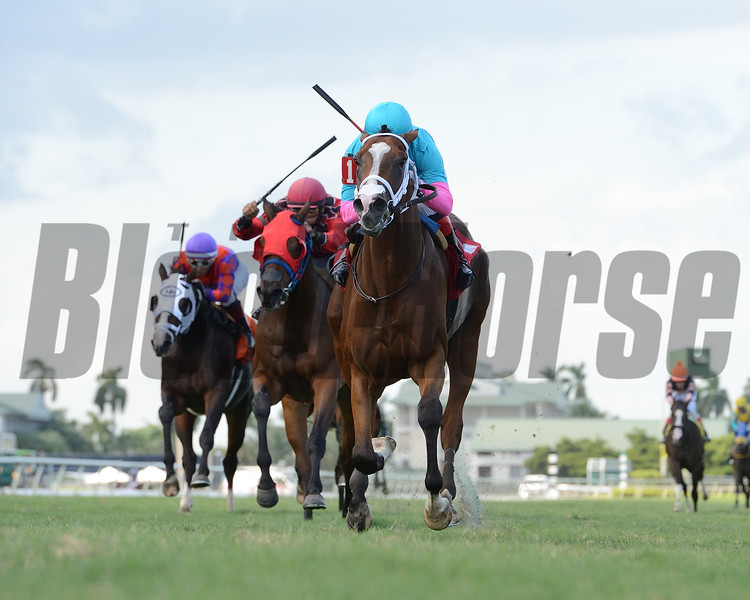 Hot Blooded wins the 2020 Proud Man Stakes at Gulfstream Park<br /> Coglianese Photos/Ryan Thompson