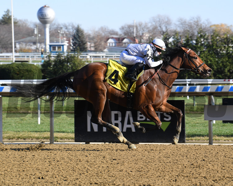 Miss Brazil wins maiden special weight Sunday, November 29, 2020 at Aqueduct. Photo: Coglianese Photos