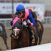 Arthur's Hope wins the 2020 Say Florida Sandy Stakes at Aqueduct. Photo: Coglianese Photos/Chelsea Durand
