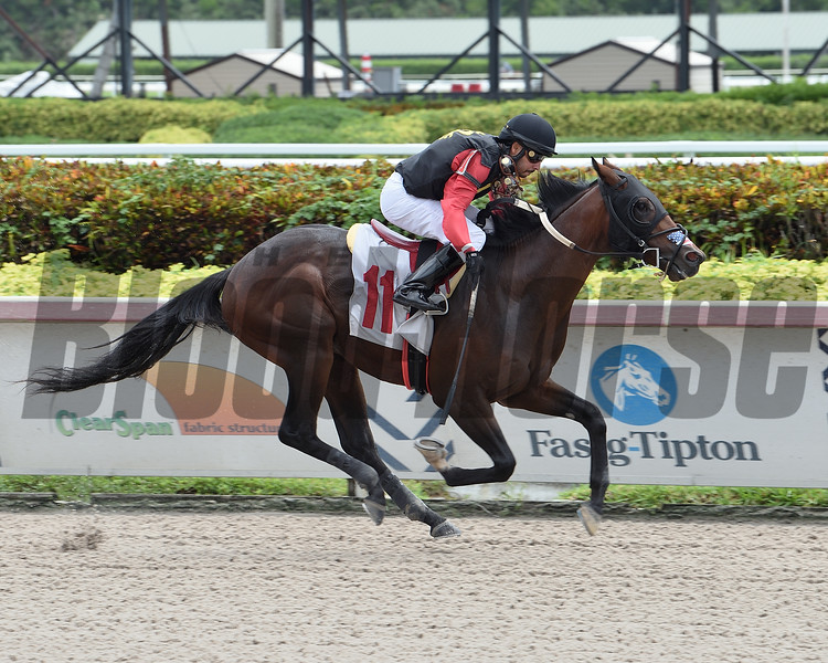 Florala Al - Maiden Win, Gulfstream Park, August 20, 2020<br /> Coglianese Photos/Lauren King