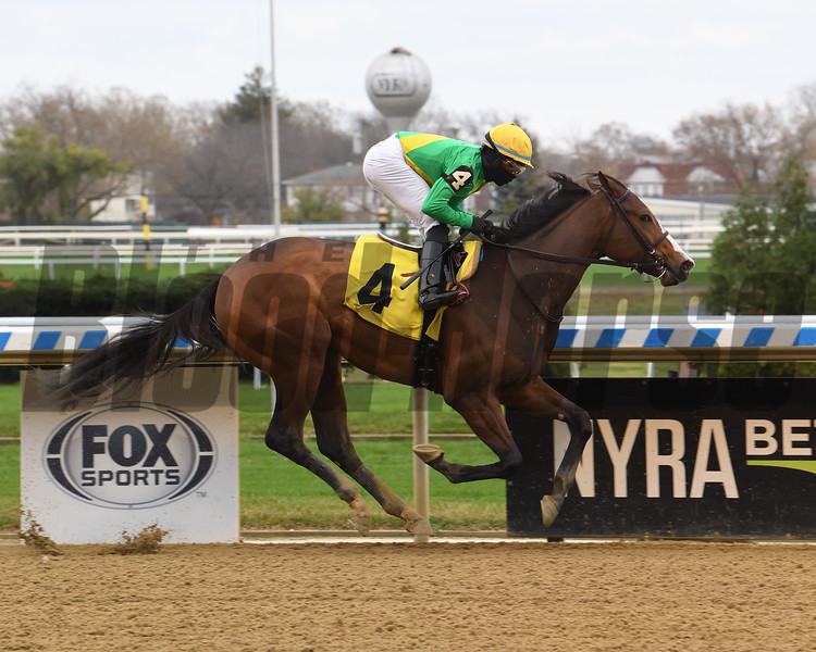 Harper's In Charge wins a maiden special weight Sunday, November 15, 2020 at Aqueduct. Photo: Coglianese Photos/Chelsea Durand