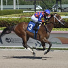 Run Devil wins 2020 Maiden at Gulfstream Park. Photo: Coglianese Photos/Lauren King