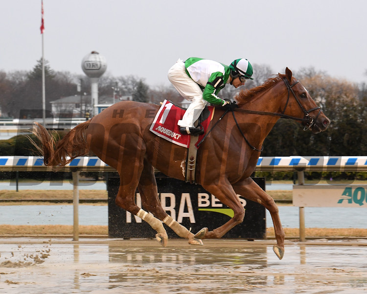 Mr. Buff wins the 2020 Jazil Stakes at Aqueduct<br /> Coglianese Photos/Chelsea Durand