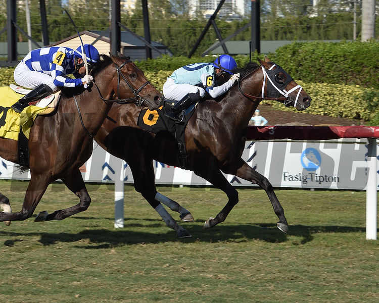 Outshine - CLM Win, Gulfstream Park, May 3, 2020<br /> Coglianese Photos/Lauren King
