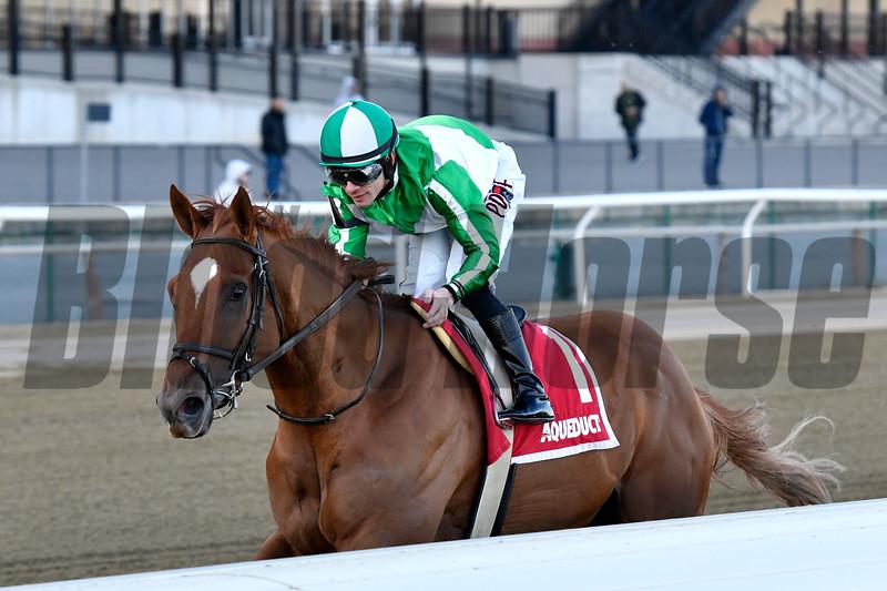 Mr. Buff wins the 2020 Haynesfield Stakes at Aqueduct<br /> Coglianese Photos/Joe Labozzetta