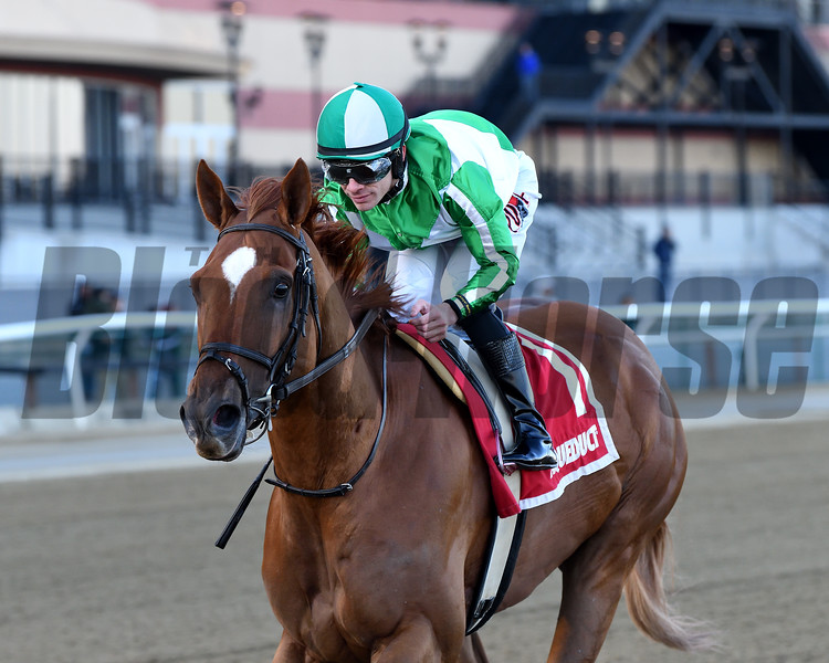 Mr. Buff wins the 2020 Haynesfield Stakes at Aqueduct<br /> Coglianese Photos/Elsa Lorieul