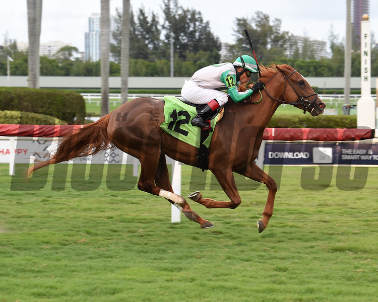 Key Biscayne wins an allowance optional claiming race Saturday, May 23, 2020 at Gulfstream Park. Photo: Coglianese Photos/Lauren King
