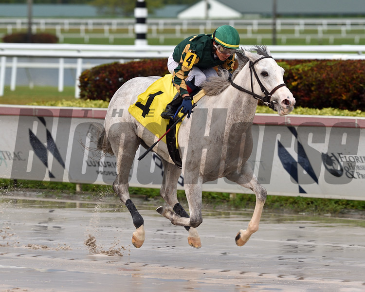 Erv's Wench wins a maiden special weight Sunday, April 26, 2020 at Gulfstream Park. Photo: Coglianese Photos/Ryan Thompson