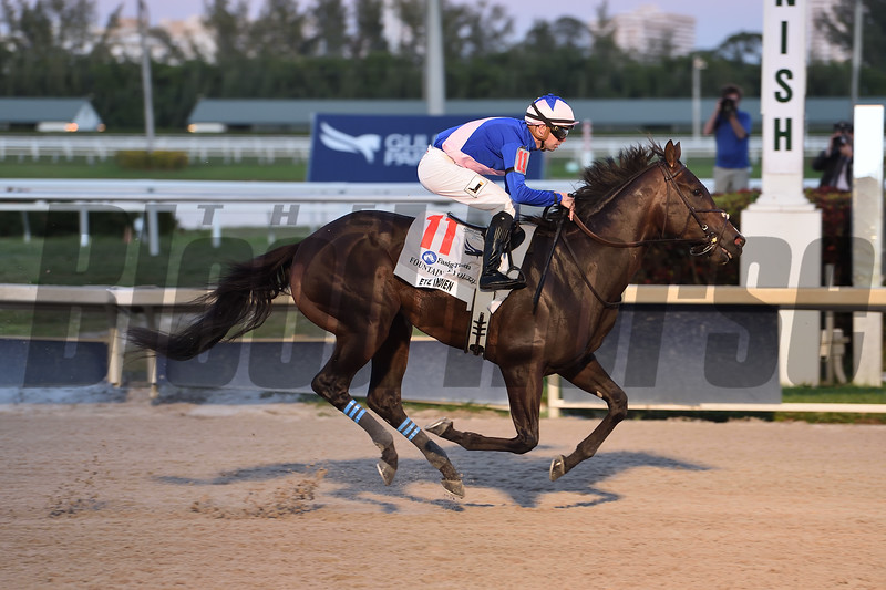 Ete Indien wins 2020 Fountain of Youth Stakes at Gulfstream Park. Photo: Coglianese Photos