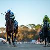 Sole Volante wins 2020 Sam F. Davis Stakes at Tampa Bay Downs. Photo: Joe DiOrio