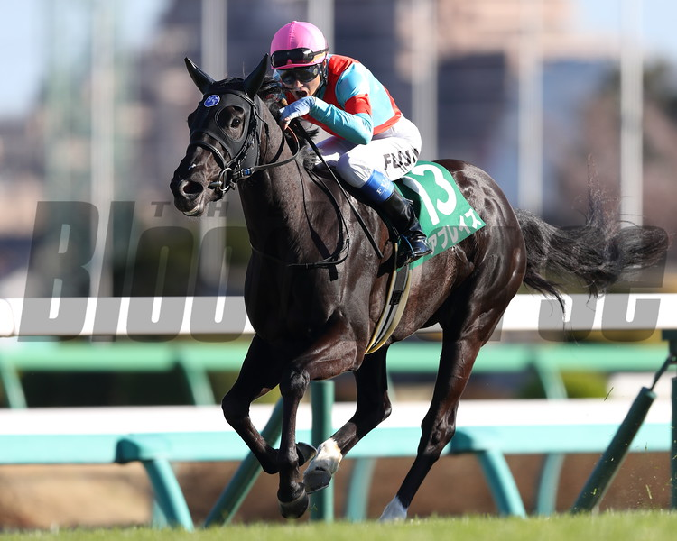 Ablaze wins the 2020 Flower Cup<br /> Photo: Masakazu Takahashi
