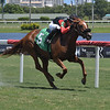 Majic Flash wins a maiden special weight Sunday, August 16, 2020 at Gulfstream Park. Photo: Coglianese Photos/Ryan Thompson