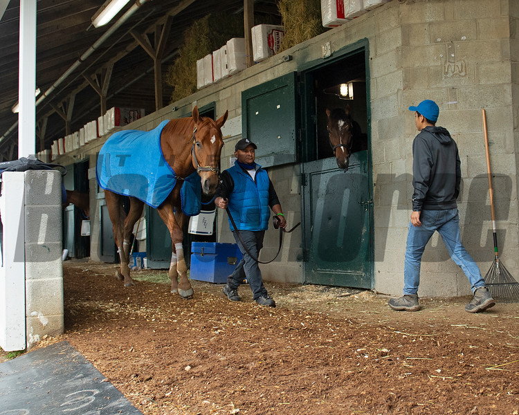 Caption: Monomoy Girl walks the shedrow<br /> Keeneland scenes and horses on April 25, 2020 Keeneland in Lexington, KY.