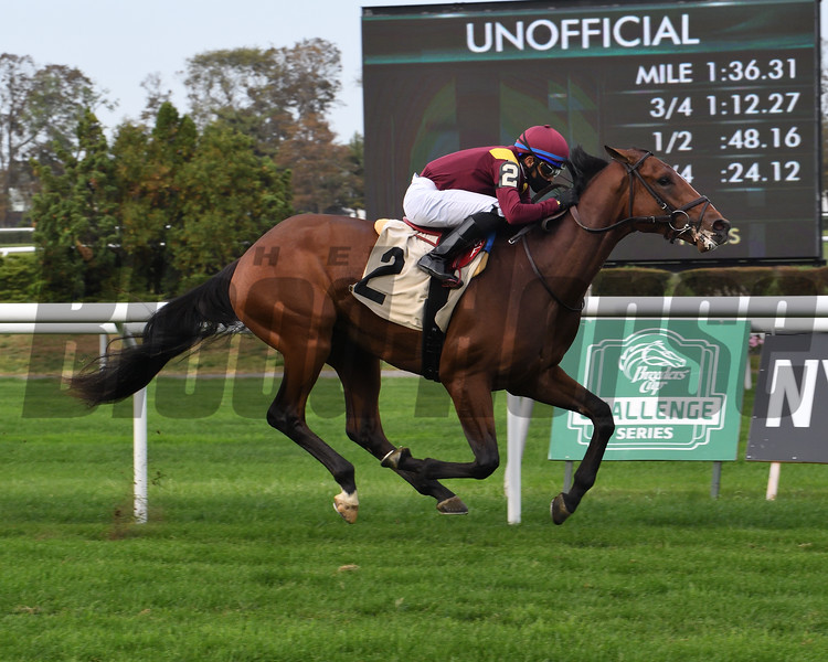 Hard Love wins a maiden special weight Saturday, October 11, 2020 at Belmont Park. Photo: Coglianese Photos