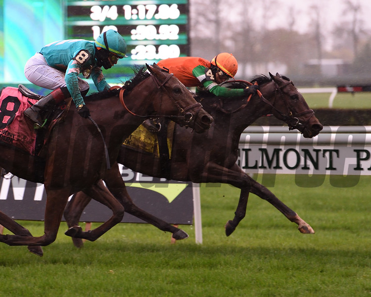 Ingrassia wins the Chelsey Flower Stakes Sunday, November 1, 2020 at Belmont Park. Photo: Coglianese Photos