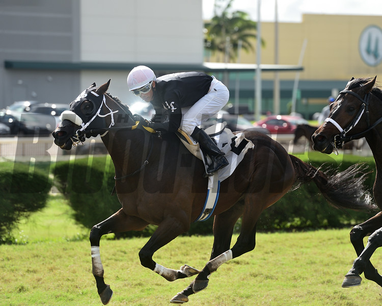 Til the End wins allowance optional claiming Saturday, November 21, 2020 at Gulfstream Park West. Photo: Coglianese Photos/Ryan Thompson