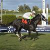 Social Paranoia wins the 2020 Appleton Stakes at Gulfstream Park. Photo: Coglianese Photos/Lauren King