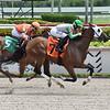 Tara wins maiden special weight Saturday, August 1, 2020 at Gulfstream Park. Photo: Coglianese Photos/Lauren King
