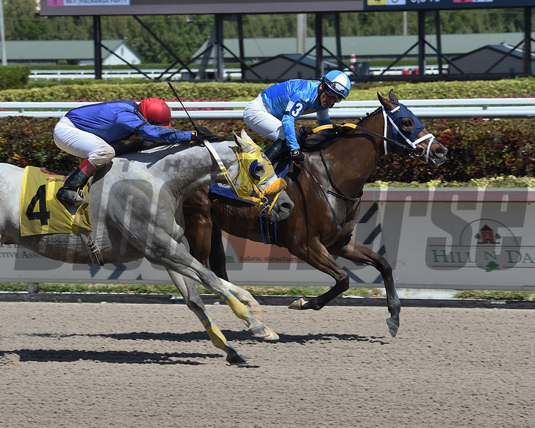 French Quarter wins a claiming race March 21, 2020 at Gulfstream Park. Photo: Coglianese Photos/Lauren King