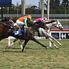 Tapaloof - Maiden Win, Gulfstream Park, March 7, 2020<br /> Coglianese Photos/Lauren King