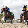 Peruvian Dancer - Maiden Win, Gulfstream Park, August 22, 2020<br /> Coglianese Photos/Ryan Thompson
