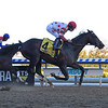 Mind Control wins the 2020 Tom Fool at Aqueduct<br /> Coglianese Photos/Viola Jasko