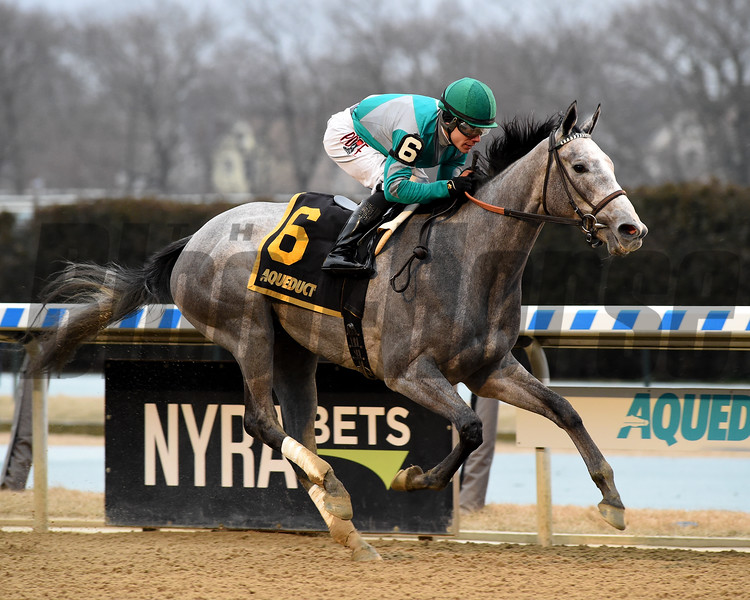 Harvey's Lil Goil wins the 2020 Busanda Stakes at Aqueduct. Photo: Coglianese Photos/Chelsea Durand