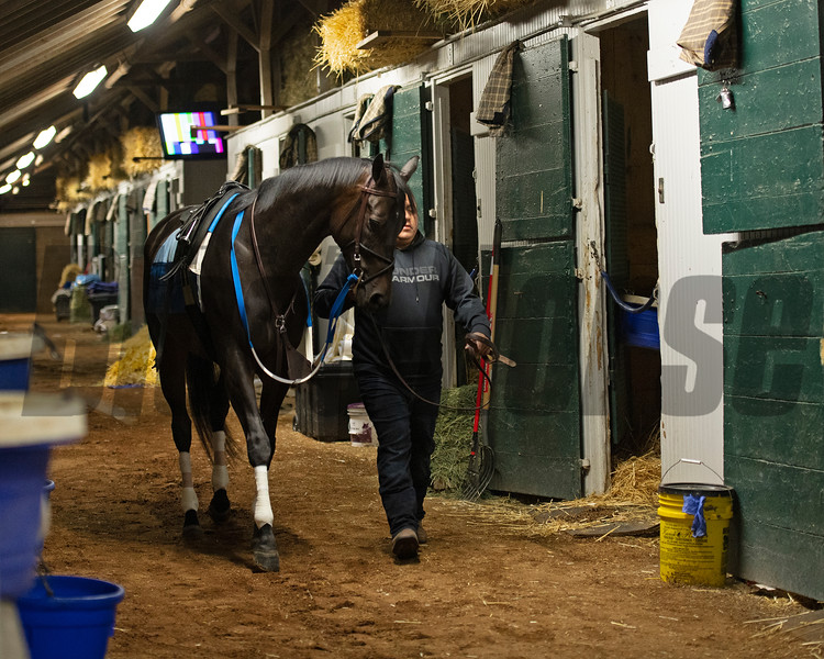 Caption: walking shedrow with her groom before training<br /> Midnight Bisou at Keeneland on May 2, 2020 Keeneland in Lexington, KY.