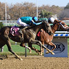Known Agenda - Maiden Win, Aqueduct, November 8, 2020<br /> Coglianese Photos